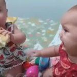 Az ikerbabák próbálnak megosztozni a kenyéren. Ám ez nem megy könnyen. Legalább mi jót nevetünk rajta: