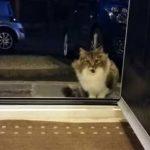 A hajléktalan macska könyörgött, hogy engedjék be: a háztulajdonos rájött, hogy a cica bizony nincs egyedül
