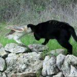 A macska a bagoly mögé lopódzik – nem rossz szándék vezérli, sőt:
