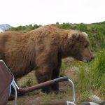 Egy hatalmas medve érkezik a horgászhoz, az állat egyáltalán nem zavartatja magát, sőt:
