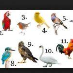 Születési hónapod madara eldalolja, milyen is vagy igazán ott, legbelül