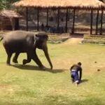Az elefánt azt hiszi, bajban van az ember, akihez úgy kötődik: egy percet sem habozik