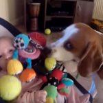 Egyszerre könnyfakasztó és nagyon vicces: felvették, milyen cukin kér bocsánatot a kutyus, aki elvette a baba játékait