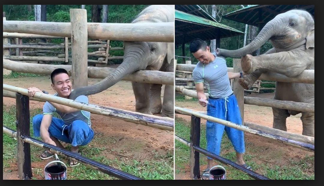 A kiselefánt játszani szeretne: vicces és meglepő furfangokat vet be gondozójánál