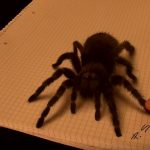 Ha te is egy nagy, szőrös pókot látsz, azt ajánljuk, nézd meg közelebbről, mert csak az agyad játszik veled