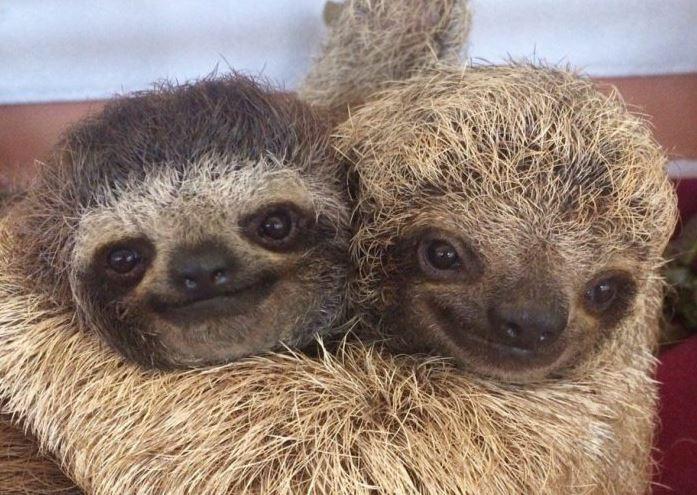 """22 viccesen romantikus """"családi fotó"""", ami megmutatja, milyen sok szeretetet képes érezni egy állat"""
