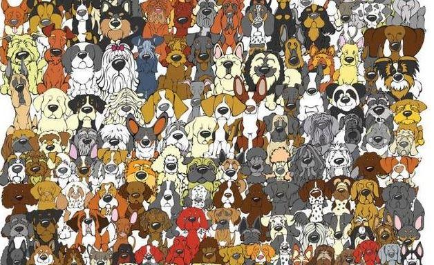 Ez tényleg fogós feladvány, de neked hátha sikerül: találj rá az egyetlen pandára a sok-sok kutya között