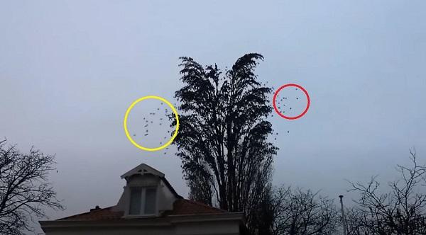 Átlagos fának gondolnánk, ám pár másodpercet követően lenyűgöző látványt rögzít a kamera: szavakkal leírhatatlan