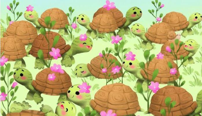 A teknősök között elrejtőzött egy aprócska csiga is: ha rálelsz, akkor szemed akár a sasé!