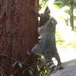 A kis mosómaci számára nem egyszerű a fára mászás, de az anyuka feltalálja magát: