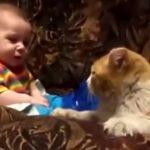A kisbaba nem szeretne aludni: a gondos cica azonban nem ismer lehetetlent