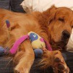 A kutya mindig az utcában lakó nőhöz kéredzkedett be aludni, egyik nap a hölgy üzenetet talált a nyakörvén