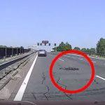 """""""Kacsafalka"""" totyogott át az M0-áson, az autósok bámulatos reflexszel reagáltak"""