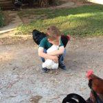 A kisfiú megöleli a tyúkot: a szárnyas meglepő módon reagál