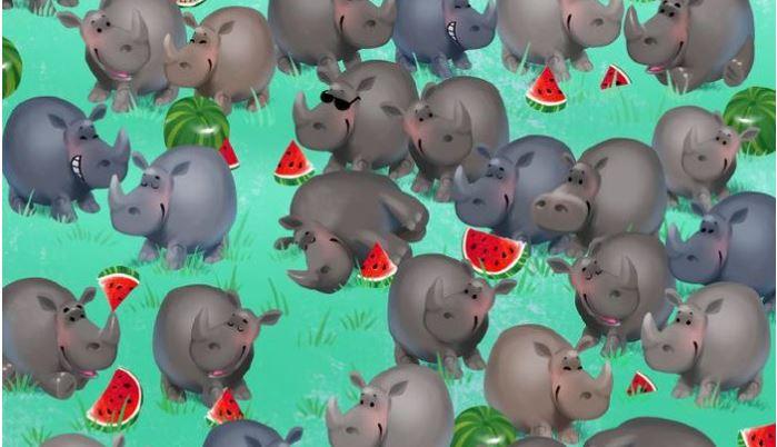 Látod-e a vízilovat a sok-sok orrszarvú között? Ha igen, a szemedre nem lehet panasz!