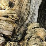 30-ból 29-en csak a fatörzset látják, és nem veszik észre a képen az állatot: te megtalálod őt?
