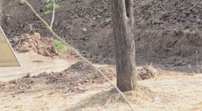 50-ből csak 2-en veszik észre a rejtőzködő leopárdot, úgy elbújt: te megleled?